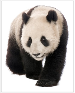 SEO update information for Google Panda algorithm.
